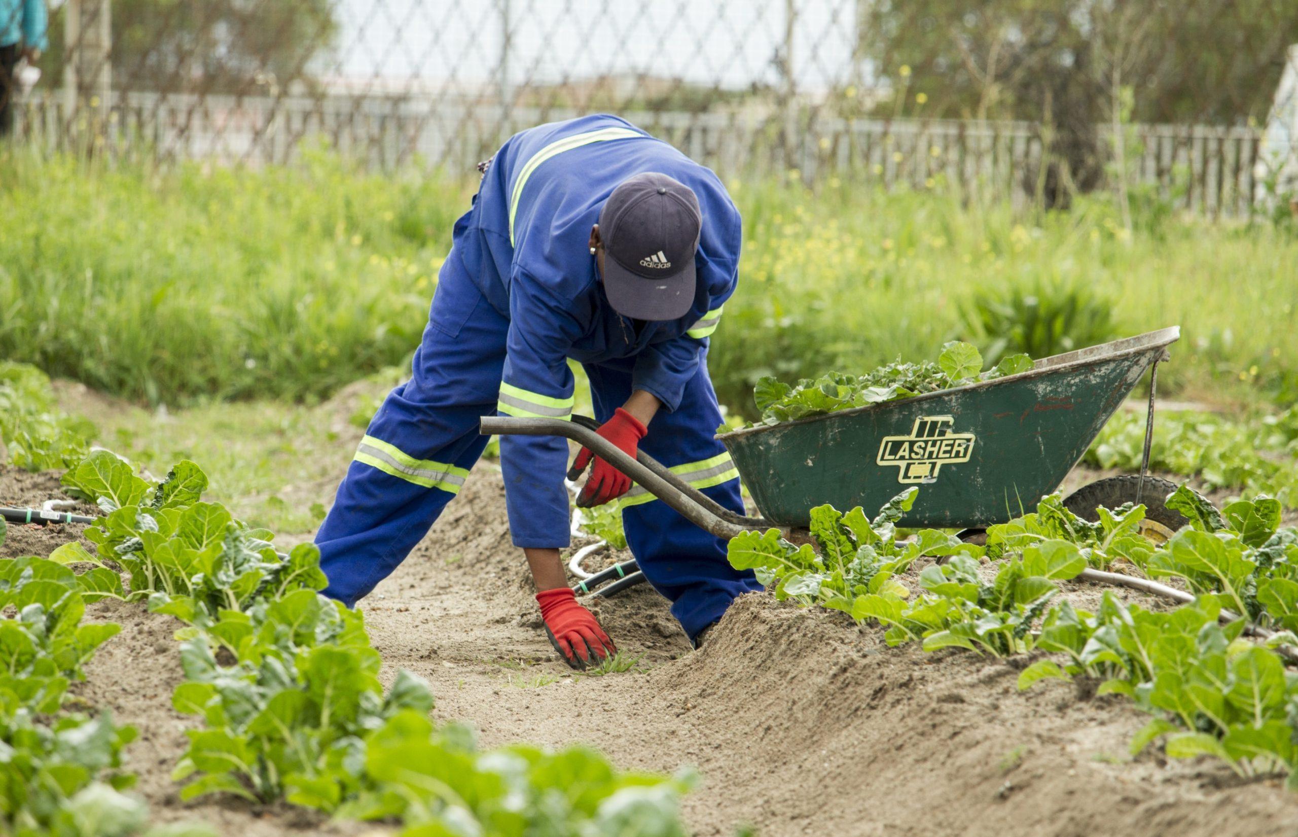 Devenir jardinier paysagiste : comment faire ? 1