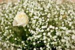Bien choisir les fleurs pour un enterrement 5
